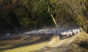 agneau bio
